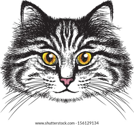 Vector sketch of a long-haired tabby cat's face - stock vector