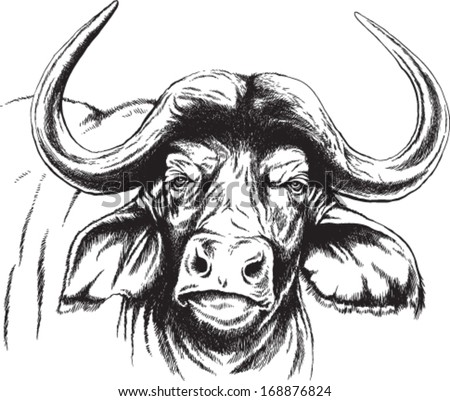 African buffalo head drawing Drawing sketch style