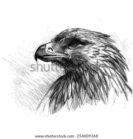 Vector sketch of eagle. Hand draw illustration. - stock vector