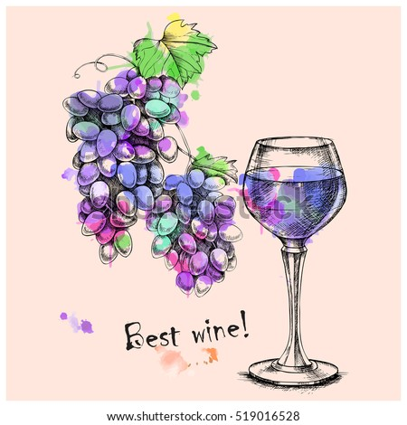 Vector sketch of grapes, wine glass on background with watercolor spray paint for design