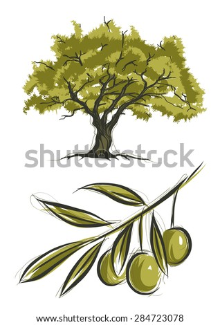 Vector sketch of olive tree - stock vector