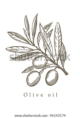 Vector sketch of olive tree branch - stock vector