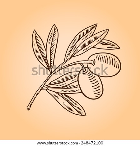 Vector sketch of olive tree branch. Engraving hand drawn style. - stock vector