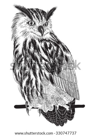Vector sketch of owl on a branch