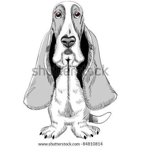 vector sketch of the dog Basset Hound breed sitting - stock vector
