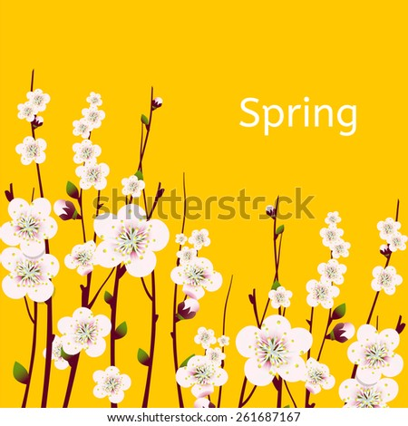 Vector spring  apricot blossoming branch on bright yellow background