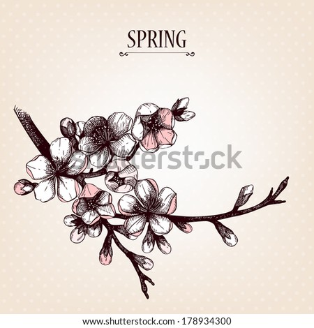 Vector spring design for your card or invitation with hand drawn blooming fruit tree twig illustration. - stock vector