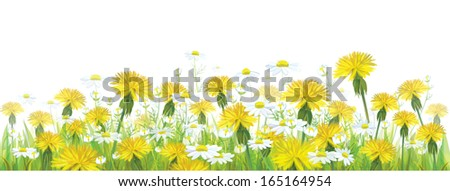 Vector spring flowers,  yellow chamomiles and dandelions.