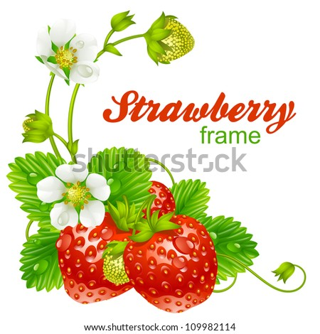 Vector strawberry frame. Red berry and white flower isolated on background - stock vector