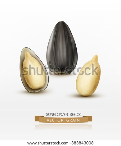 Vector sunflower seeds isolated on white background