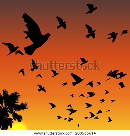 Vector sunset tropical birds silhouettes flying above the palm tree - stock vector