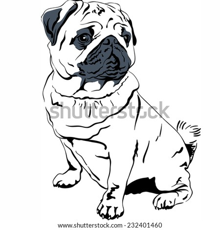 Vector Sweet dog pug breed hand drawing vector - stock vector