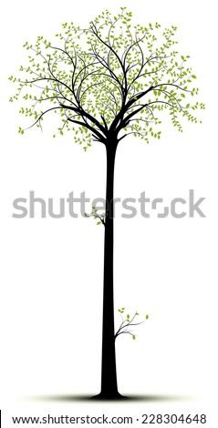 Vector tall tree isolated over white with  green foliage and black tree. Silhouette suitable for sticker and decorative element