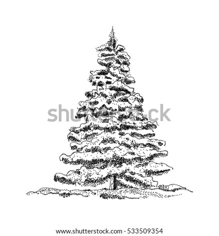 vector -three spruce trees isolated on background