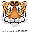 vector tiger head - stock vector