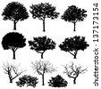 Vector trees in silhouettes. Create many more trees with leaves and bare trees on the bottom - stock