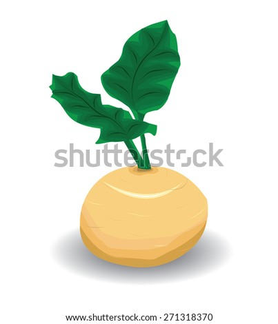 Vector turnip  - stock vector