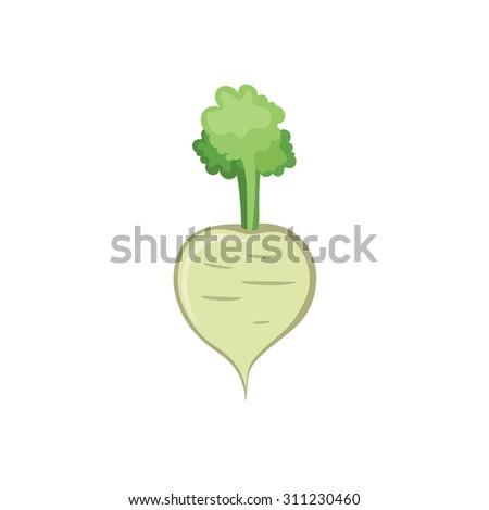 Vector Vegetables - Radish - stock vector