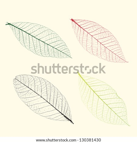 Vector veins of plants - stock vector