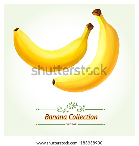 Vector version of Banana fruit. Isolated on white background. Realistic digital paint. - stock vector