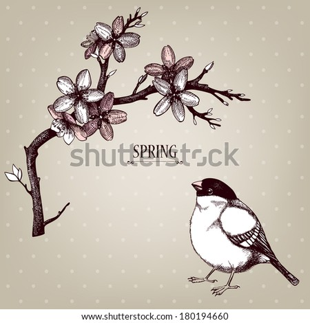 Vector vintage  design for your card or invitation  with hand drawn blooming fruit tree twig  and birds. Spring flower illustration on background - stock vector