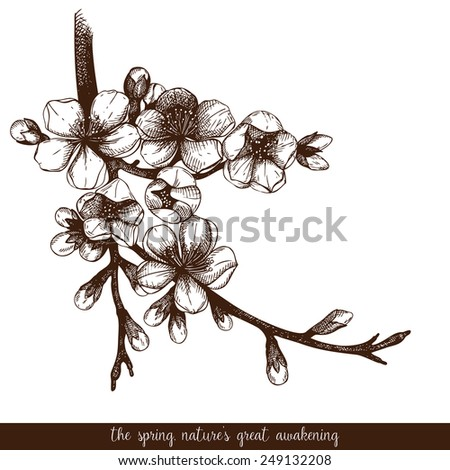 Vector vintage design for your card or invitation with hand drawn blooming fruit tree twig. Spring flower illustration. - stock vector