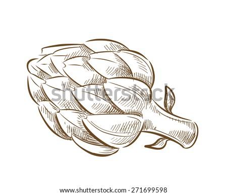 vector vintage hand drawn picture of artichoke - stock vector