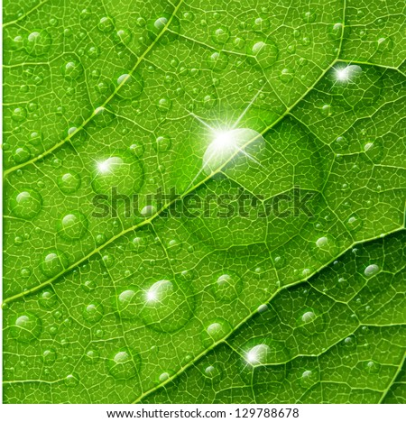 Vector water drops on green leaf macro background. - stock vector