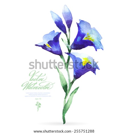 Vector watercolor flower on white backdrop. Isolated beautiful blue bells. - stock vector