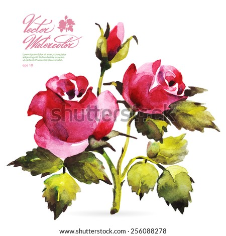 Vector watercolor flower on white backdrop. Isolated beautiful pink roses and bud. - stock vector