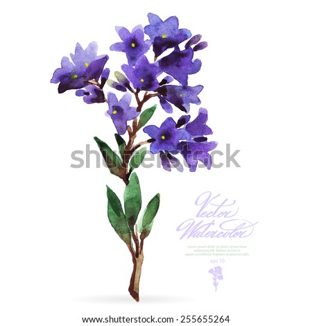 Vector watercolor flower on white backdrop. Isolated beautiful purple bells. - stock vector