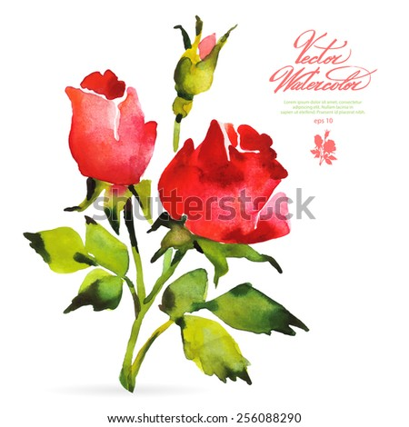 Vector watercolor flower on white backdrop. Isolated beautiful red roses and bud. - stock vector