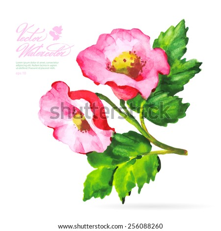 Vector watercolor flower on white backdrop. Isolated beautiful summer pink flowers. - stock vector