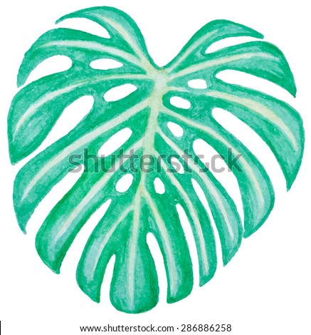 Vector watercolor green leaf for design