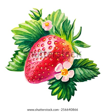 vector watercolor hand draw strawberry stock vector royalty free