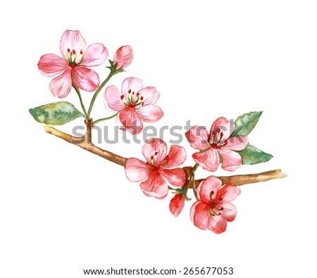 Vector watercolor illustration of blooming apple tree branch.