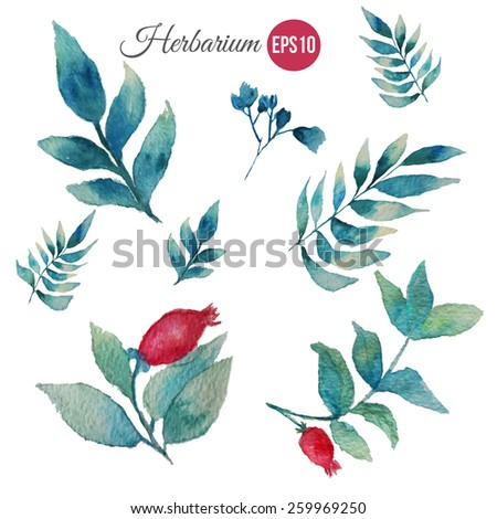 Vector watercolor set of green leaves with berries. Modern elements for your design. Can be used in posters, invitations, banners - stock vector