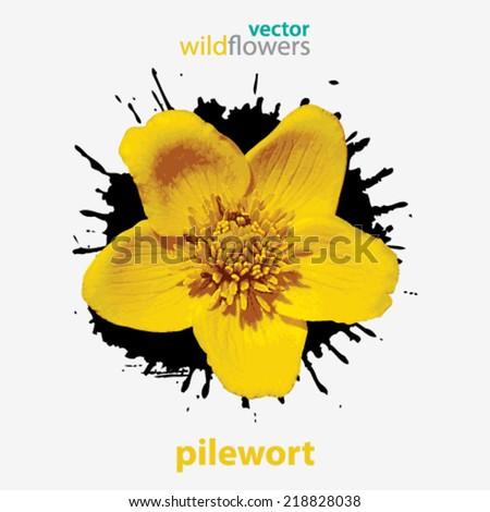 Vector wildflower, pile wort background illustration - stock vector