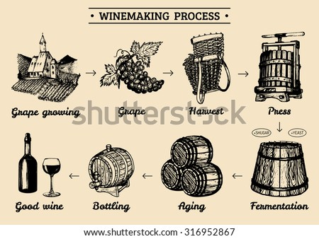 Vector wine infographics with illustrations of winery process. Winemaking diagram design. Vino producing hand sketched drawings. Vine-making operations elements.
