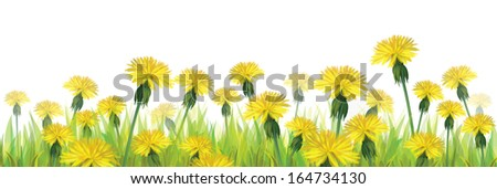 Vector yellow dandelions isolated.