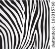 vector zebra texture - stock vector