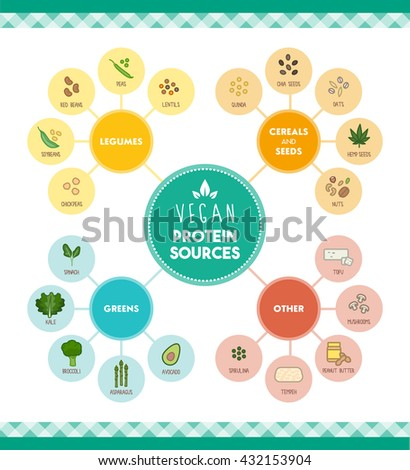 Vegan protein food sources infographic with food icons and categories - stock vector