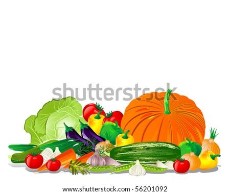 Vegetable harvest - stock vector