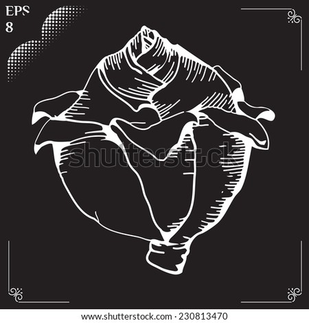 Vegetable organic food cabbage. Vector illustration drawn in chalk. Head of cabbage. Cabbage cartoon. Vector illustration of engraving cabbage on black background. Eps 8