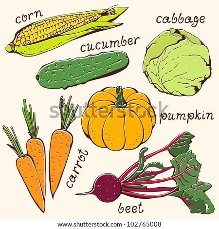 Vegetable vegetarian set on a beige background - stock vector
