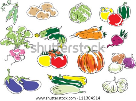Vegetables - stock vector
