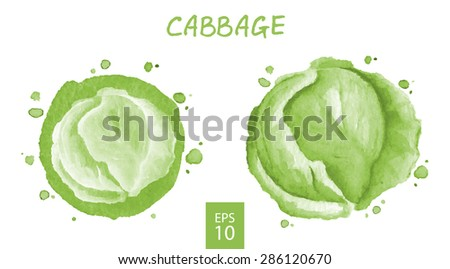 Vegetables set - cabbage. Watercolor drawing. Vector