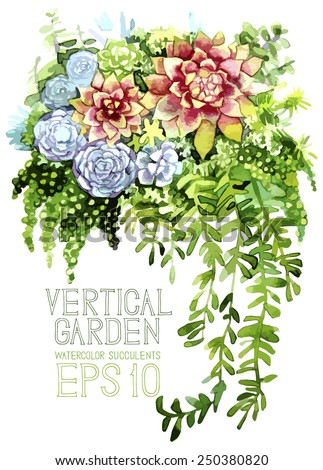 Vertical garden. Watercolor succulents. Vector design - stock vector
