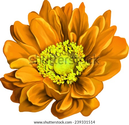 very beautiful bright orange flower, vector - stock vector