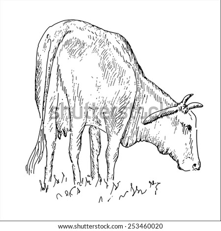Vietnamese cow - stock vector